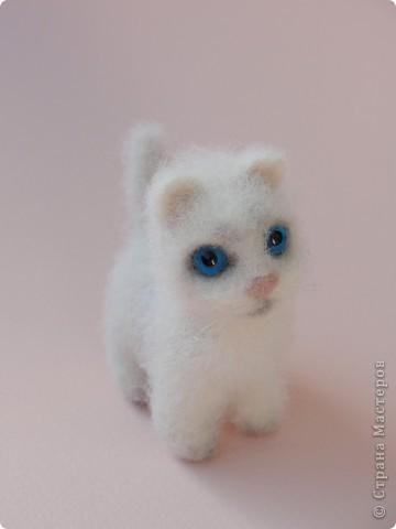 Маленький котенок Сева)))) фото 1