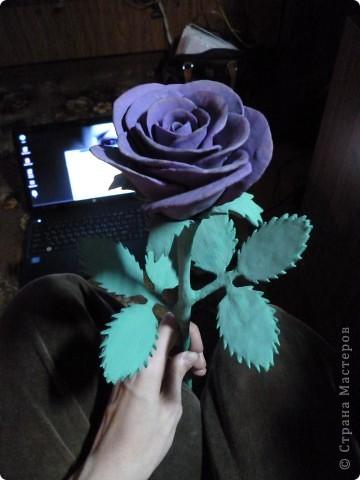 Роза на День Рождения  фото 1
