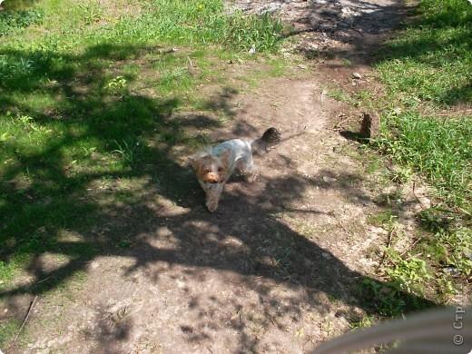 Тут она в саду фото 4