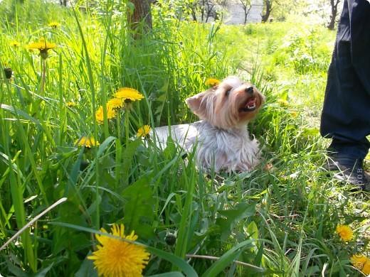 Тут она в саду фото 5
