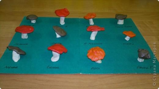 За грибами в лес пойдем...