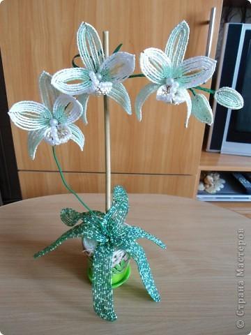 орхидея фото 4