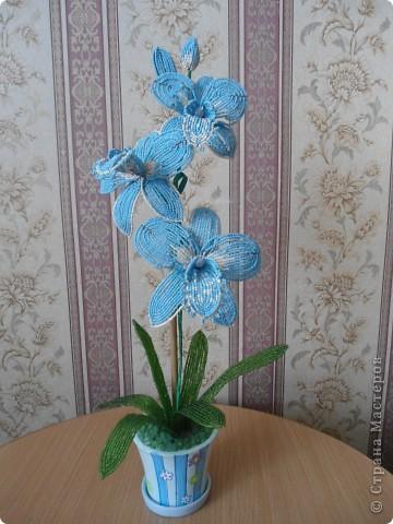 орхидея фото 11