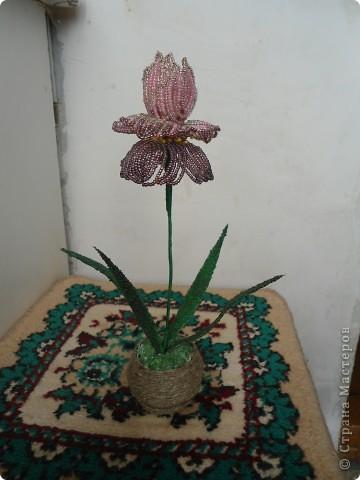 орхидея фото 13