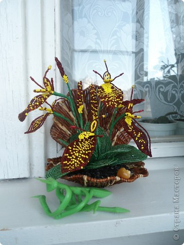 орхидея фото 17