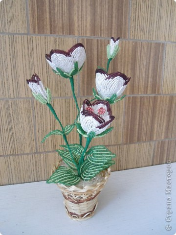орхидея фото 18