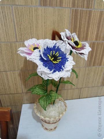 орхидея фото 19