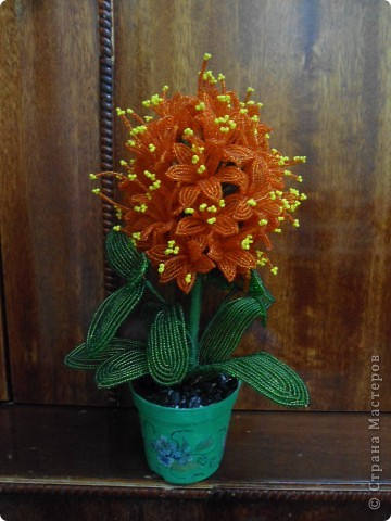 орхидея фото 23