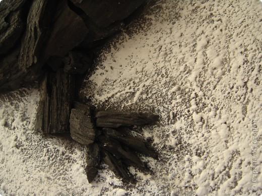 Угольная ящерица фото 3