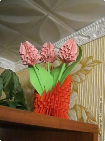 цветущий кактус фото 6