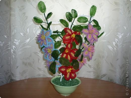 орхидея фото 40
