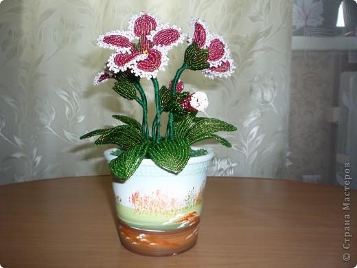 орхидея фото 38
