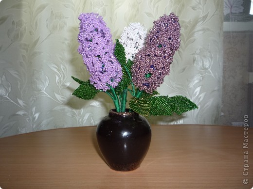 орхидея фото 37
