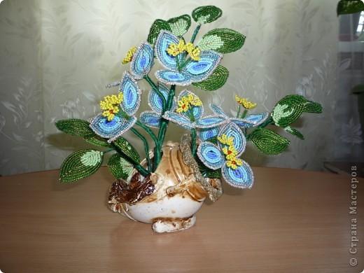 орхидея фото 36