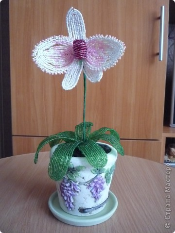 орхидея фото 35