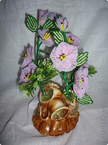 орхидея фото 29