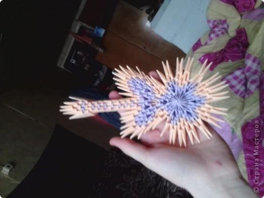 цветущий кактус фото 9