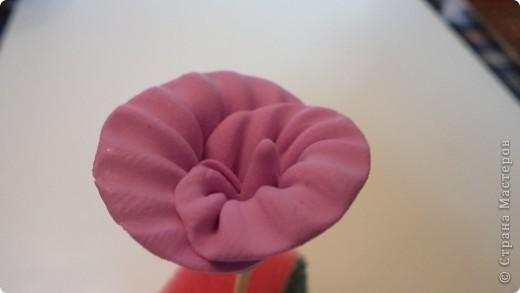 """Как-то сам собой получился цветок """"неопознанной породы"""".  фото 10"""