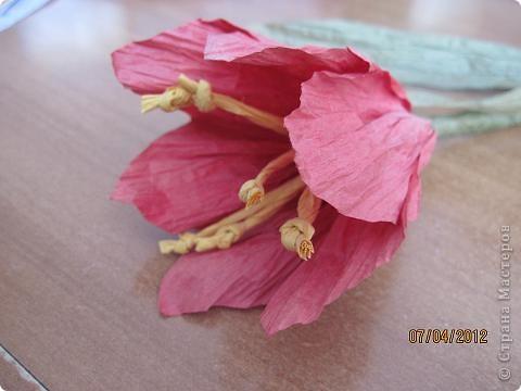 сам цветок фото 2