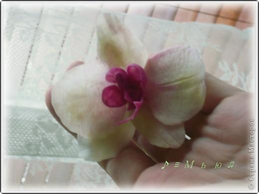 Все жду не дождусь появления молдов, но охота пуще неволи, как говорится, пока вот такая гибридная орхидея вышла... фото 2