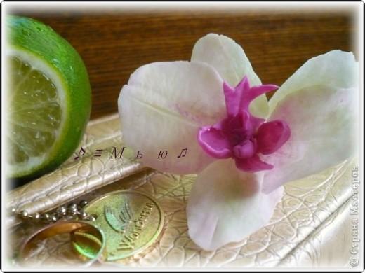 Все жду не дождусь появления молдов, но охота пуще неволи, как говорится, пока вот такая гибридная орхидея вышла... фото 5