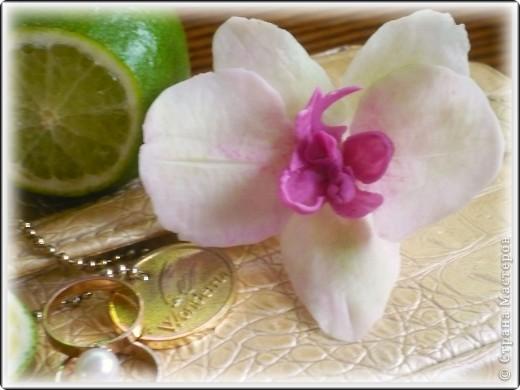 Все жду не дождусь появления молдов, но охота пуще неволи, как говорится, пока вот такая гибридная орхидея вышла... фото 1