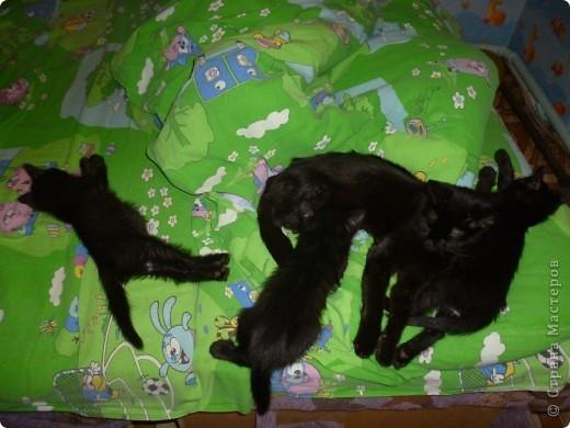 Здравствуйте! Это фоторепортаж о моих домашних животных, начнем: фото 3
