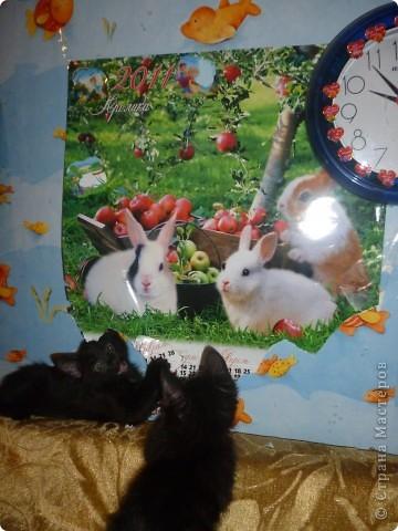 Здравствуйте! Это фоторепортаж о моих домашних животных, начнем: фото 9