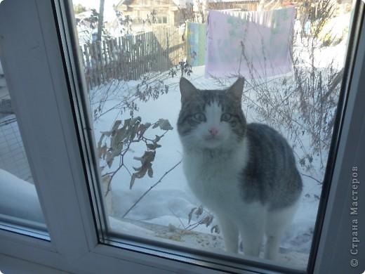 Здравствуйте! Это фоторепортаж о моих домашних животных, начнем: фото 15