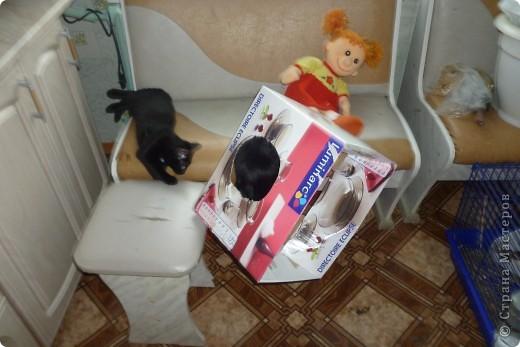 Здравствуйте! Это фоторепортаж о моих домашних животных, начнем: фото 11