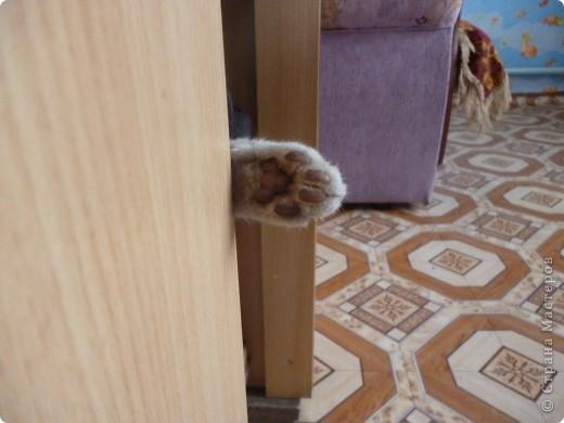 Здравствуйте! Это фоторепортаж о моих домашних животных, начнем: фото 12