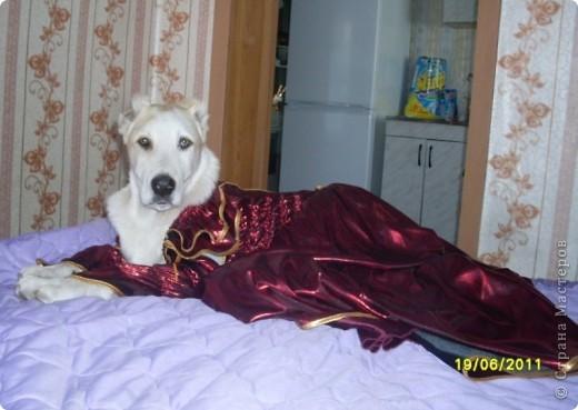 Здравствуйте! Это фоторепортаж о моих домашних животных, начнем: фото 23