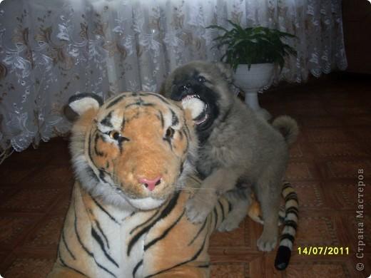Здравствуйте! Это фоторепортаж о моих домашних животных, начнем: фото 25