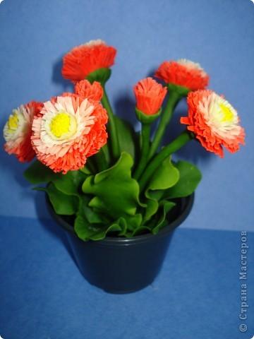 очень понравились Танюшины маргаритки http://stranamasterov.ru/node/322899?c=favorite решила и себе настричь,у меня они конечно жиденькие получились и хватило меня всего на пять цветов,но понравился процесс фото 2