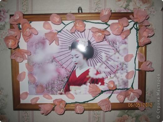 Моя сакура фото 2
