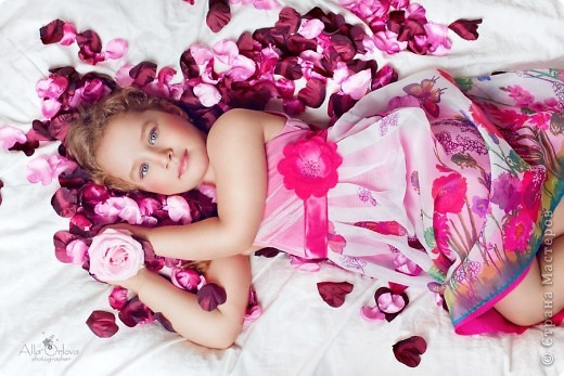 Лепестки роз. фото 1