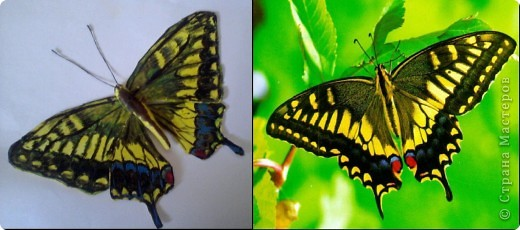 Бабочка из термопластика фото 5