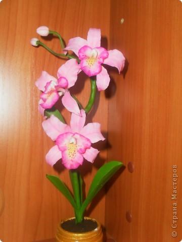 Здравствуйте! Вот опять наляпала орхидейки. Розовая. фото 1