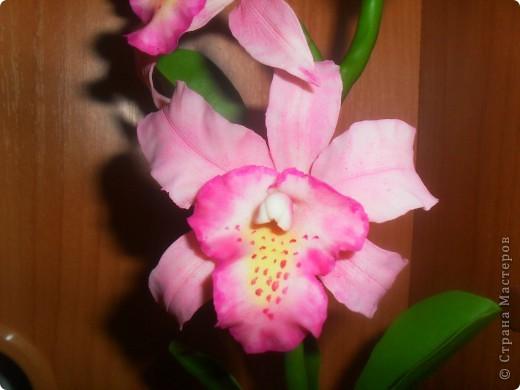 Здравствуйте! Вот опять наляпала орхидейки. Розовая. фото 2