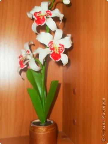 Здравствуйте! Вот опять наляпала орхидейки. Розовая. фото 3
