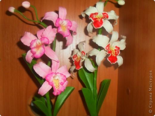 Здравствуйте! Вот опять наляпала орхидейки. Розовая. фото 5
