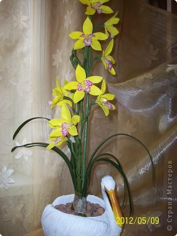 Орхидея Цимбидиум фото 1