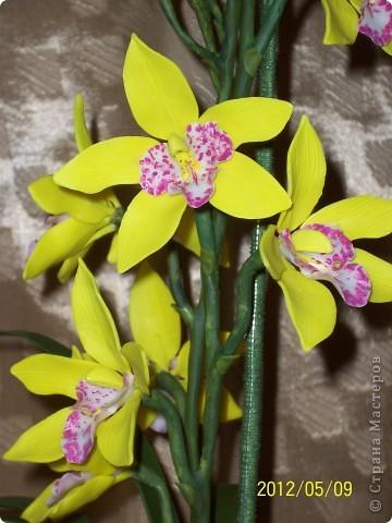 Орхидея Цимбидиум фото 3