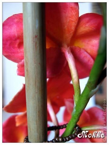 Доброго всем времени дня))) Поздравляю всех с днем Победы! И цветы к празднику))) Слепились две орхидейки - фаленопсис и венерин башмачок. Фаленопсис задумывался белым, но потом вдруг захотелось чего-то попугайно-яркого, перекрасила))) Лепила и ту, и другую орхидею в первый раз, поэтому замечания принимаются))) фото 3