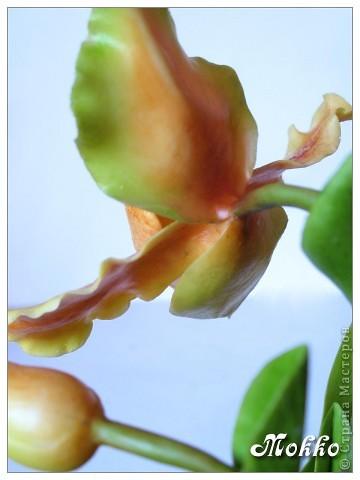 Доброго всем времени дня))) Поздравляю всех с днем Победы! И цветы к празднику))) Слепились две орхидейки - фаленопсис и венерин башмачок. Фаленопсис задумывался белым, но потом вдруг захотелось чего-то попугайно-яркого, перекрасила))) Лепила и ту, и другую орхидею в первый раз, поэтому замечания принимаются))) фото 9