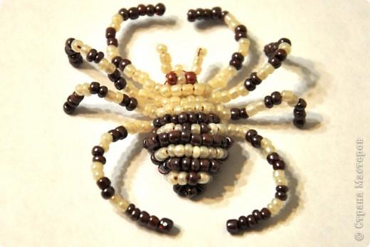 Поделка изделие Бисероплетение Паучок и скорпион из бисера Бисер фото 1.