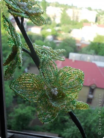 дерево для дяди фото 7