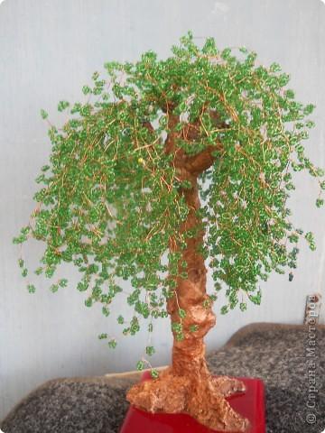 дерево для дяди фото 3