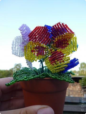Вот таие яркие поучиись цветы фото 1