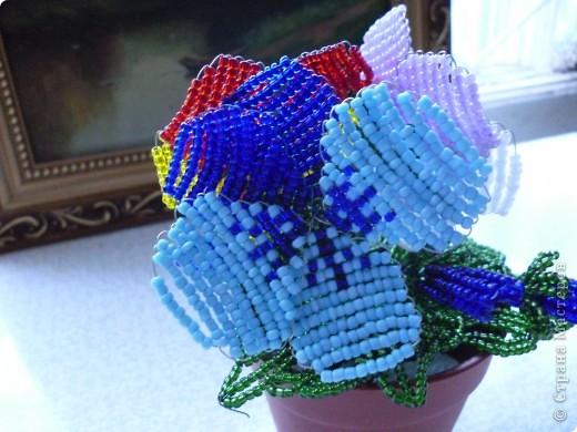 Вот таие яркие поучиись цветы фото 2